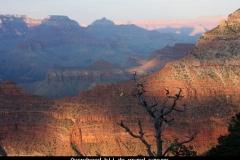 Avondrood bij de grand canyon Amerika met kinderen