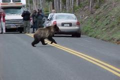 Beren in Yellowstone Amerika met kinderen