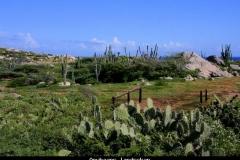Arubaans landschap Aruba met kinderen