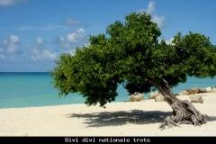 Divi divi nationale trots Aruba met kinderen