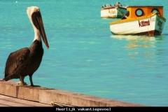Heerlijk vakantiegevoel Aruba met kinderen