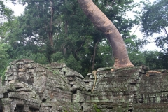 Banyan overwoekering Angkor