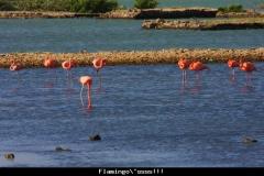 Curacao flamingooooosssss Curacao met kinderen
