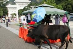 Hong Kong heilige koe