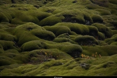 Groen IJsland met kinderen