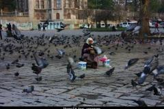 Vogeltjes voeren Istanbul met kinderen