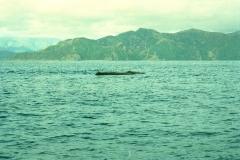 Kaikoura sperm kolos walvissen Nieuw Zeeland met kinderen