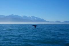 Kaikoura sperm walvissen Nieuw Zeeland met kinderen
