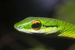 Akelig groen