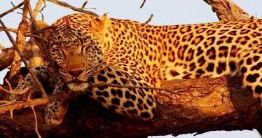 Kruger Zuid Afrika met kinderen