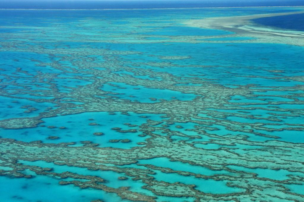Great barrier reef Australië met kinderen