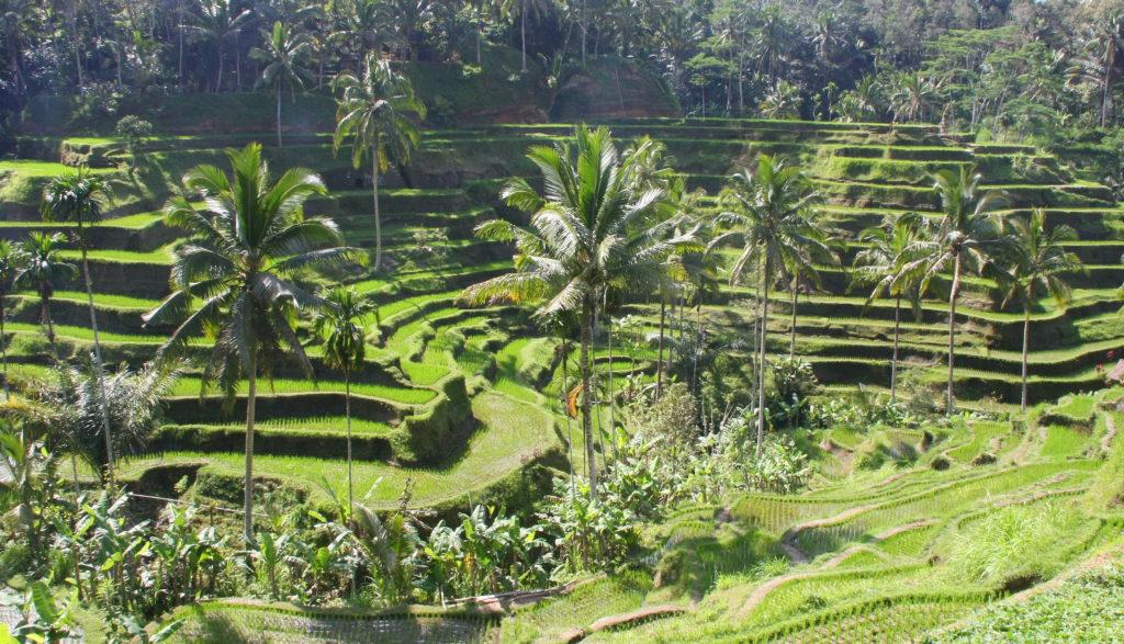 Bali met kinderen activiteiten