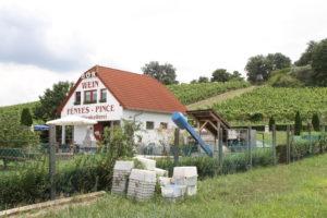 Wijn maker aan Neusiedler see in Fero Hansag nationaal park Hongarije met kinderen