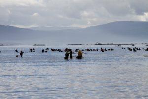 Kokkel vissers Muros Rias Baixas Galicie Spanje